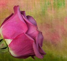 Pretty in Pink by Judy Vincent