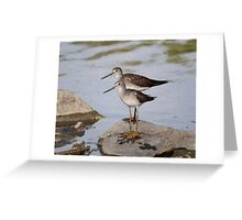 Pair of Lesser Yellow Legs.. Greeting Card