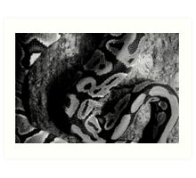 Sinuous Patterns Art Print