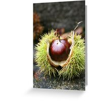Chestnut in green prickly case - 2009 Greeting Card
