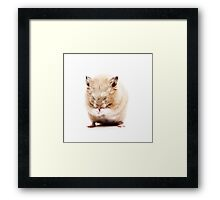 Sleepy Hamster Framed Print