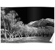 Willows, Lake Pearson - B&W Poster