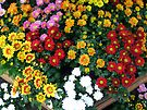 Rainbow of flowers by Antionette