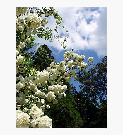 Zen sky Photographic Print
