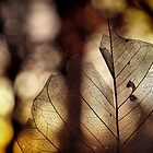 leaf at sunset by charitygrace