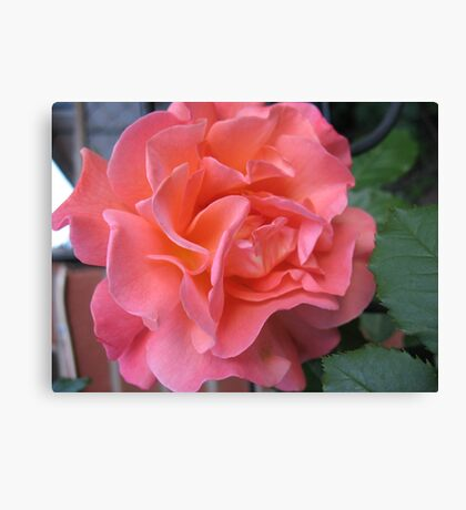 West Side Story Rose - Little Maria Canvas Print