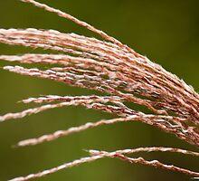 A Grassy Blur  by Ricky Pfeiffer