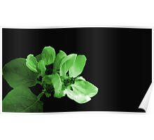 Green Apple Blossom Poster