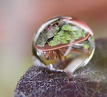 Plant in a Bubble by Stacy Colean