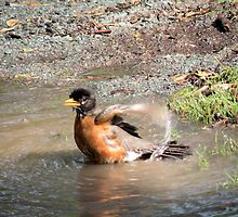 Puddle Bath by Rosalie Scanlon