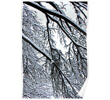 Snow Branches 2 Poster