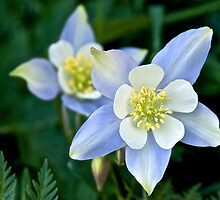 Columbine by Eric Seale