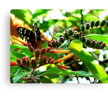 Nature's Wings Canvas Print