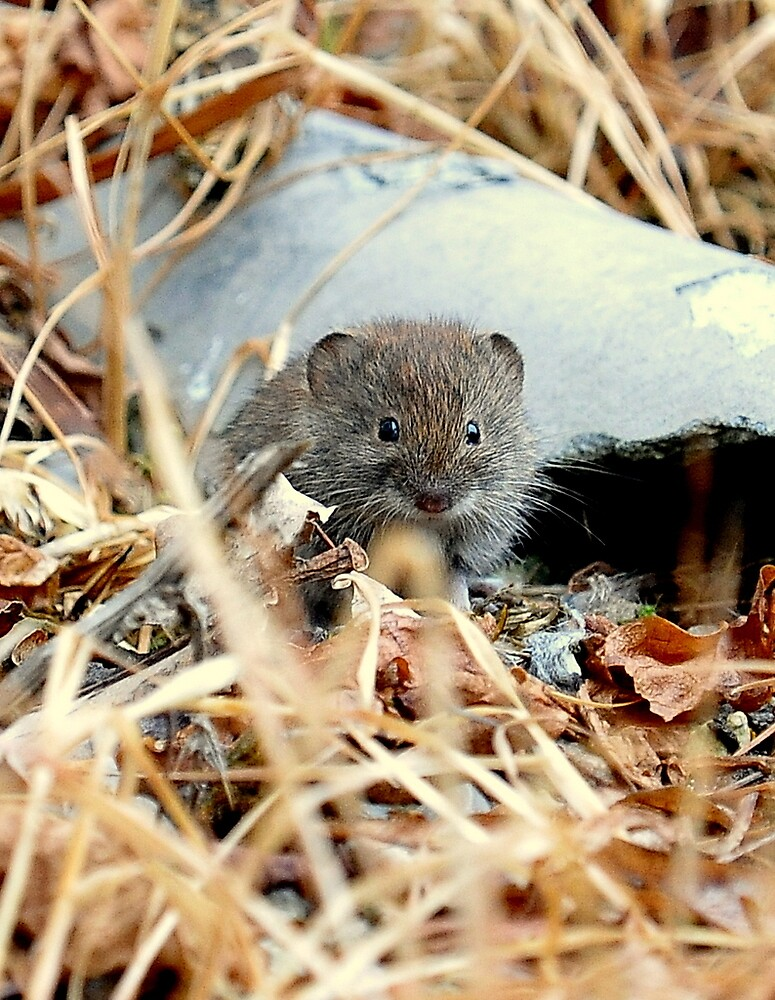 A mouse by it's house by Alan Mattison