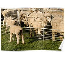 Lamb searches for Mum Poster
