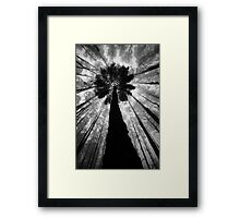 The Forest. Framed Print
