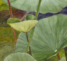 Lotus by Rainer Jacob