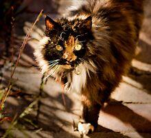 Afternoon Cat by Josie Eldred