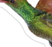 Rufous-tailed hummingbird in flight Sticker