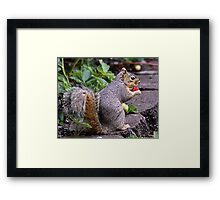 I Shot this Little Thief Eating my Strawberries  Framed Print