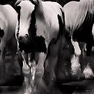 Wild Horses 1 by Hushabye Lifestyles