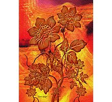 Fire Flowers Photographic Print