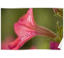 Flower Essence Poster