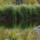 Wild Pond Grass by MaeBelle