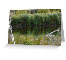 Wild Pond Grass Greeting Card