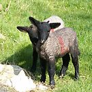 We See Ewe.. by eithnemythen