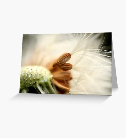 In The Breeze Greeting Card