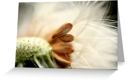 In The Breeze by Sharon Johnstone