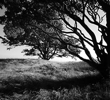 Silhouette of the tree  by Darren Bailey LRPS