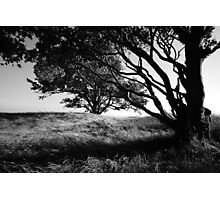 Silhouette of the tree  Photographic Print