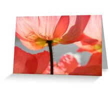 Pink poppy from below - 2011 Greeting Card