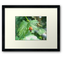 Ladybug, ladybug, do your thing... Framed Print
