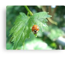 Ladybug, ladybug, do your thing... Canvas Print
