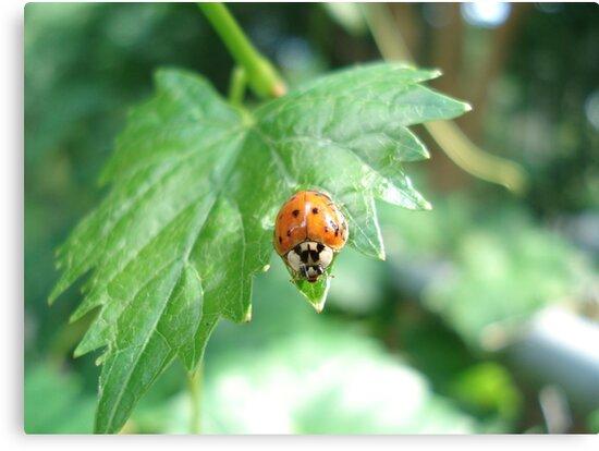 Ladybug, ladybug, do your thing... by May Lattanzio