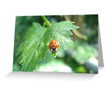 Ladybug, ladybug, do your thing... Greeting Card