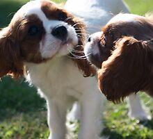 Curious pups by ellanewbury