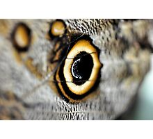 Butterfly circles of orange - Owl butterfly Photographic Print
