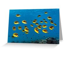 Sea Butterflys Greeting Card