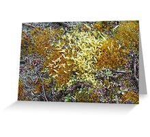 Moss on ground - 2011 Greeting Card