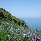 Bells Into Blue....Bossiney, North Cornwall. by greenstone