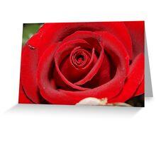 red rose red rose Greeting Card