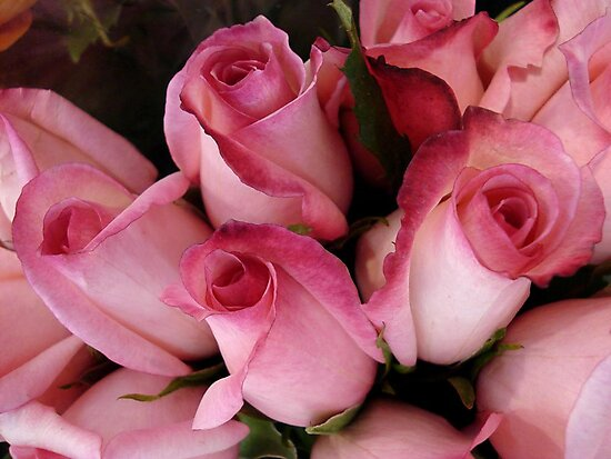 PRETTY PINK ROSEBUDS by May Lattanzio