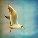 Bird in Flight by Liz Scott