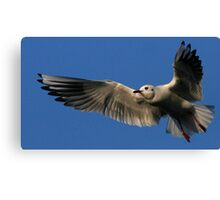 Flight Of The Gull Canvas Print