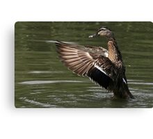 The One With The Shiny Beak Canvas Print