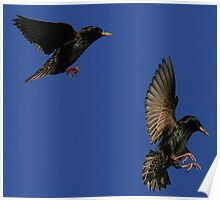 Flight Of The Starlings Poster